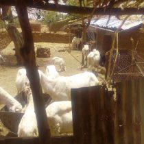 La ferme de Malbaza