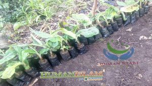 agricole_comores_2